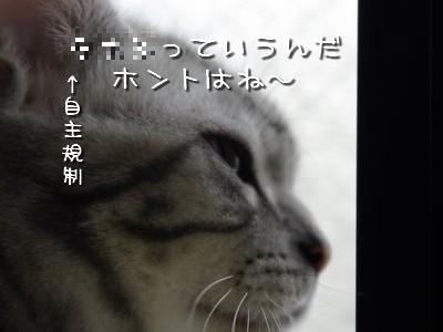 _igp3477_1