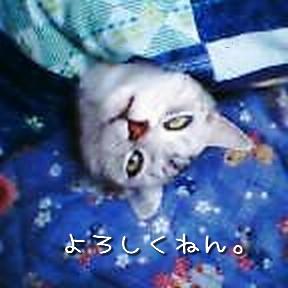 Momokinoko